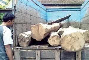 BARANG BUKTI: Truk bersama gelondongan kayu jati diamankan