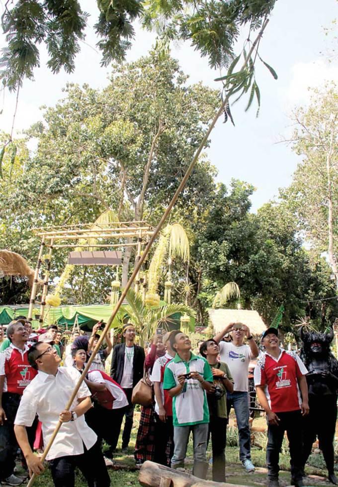 Bupati-Abdullah-Azwar-Anas-mengambil-buah-petai-dengan-galah-bambu-di-arena-Konferensi-Indonesia-Berkebun,-kompleks-GOR-tawang-Alun,-Banyuwangi,-pagi-kemarin