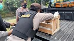 Cari Ranting Pohon Loa, Anggota Polisi di Banyuwangi Justru Temukan 5 Bondet