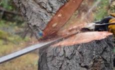 Permalink ke Di Monas, 1.500 Pohon Ditumbangkan