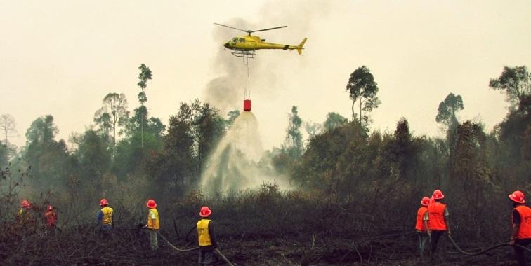 Ilustrasi kebakaran hutan dan lahan/blog.act.id.