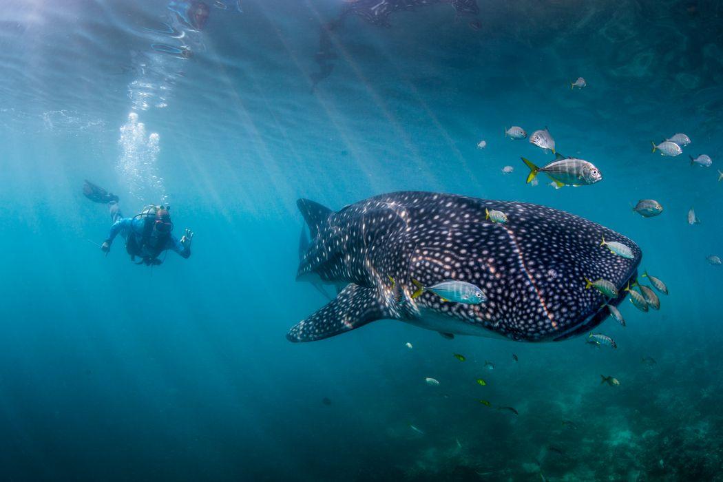 ekpedisi hiu paus-7