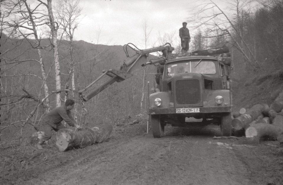 Plumadun kamioia