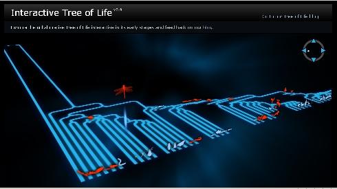interactivetreeoflife3