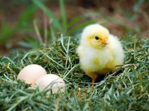 nestivity 4
