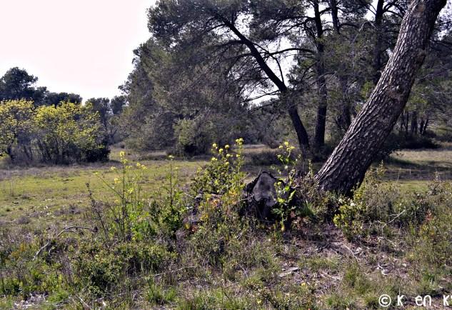 Photo de la garrigue et des pins dans la montagne noire