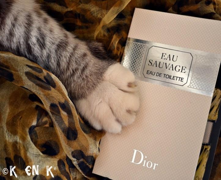 projet 52 thème n°19 chat foulard et eau de toilette
