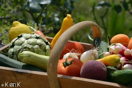 theme 24 nourriture avec des légumes bio présenté dans la vendangeuse