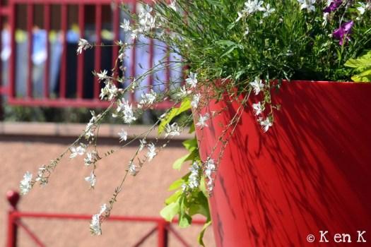 theme 26 pot de fleur rouge