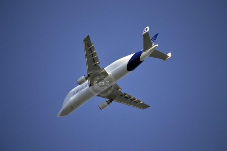 transport-avion-beluga-voyager