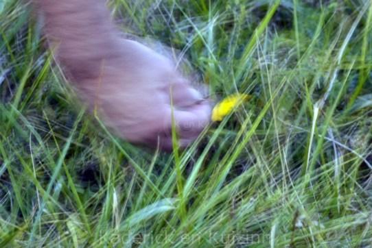 nature-blog-fleur-campagne