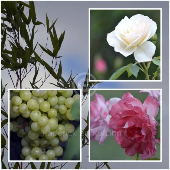 jardin-fleurs-blog-photos
