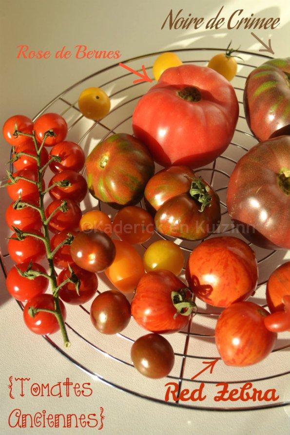 Variétés de tomates anciennes bio avec des Red zébra, noires de Crimée et rose de Bernes