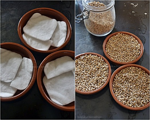 Noël Tradition Provençale avec le blé de la Sainte Barbe à planté le 04 décembre - Kaderick en Kuizinn©