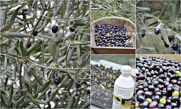 recette des olives fait maison kaderick en kuizinn. Black Bedroom Furniture Sets. Home Design Ideas