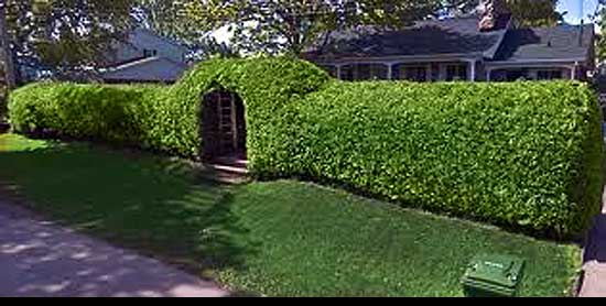 Best way to cut a privet Hedge, entry-gate-wall-shape-hedge,