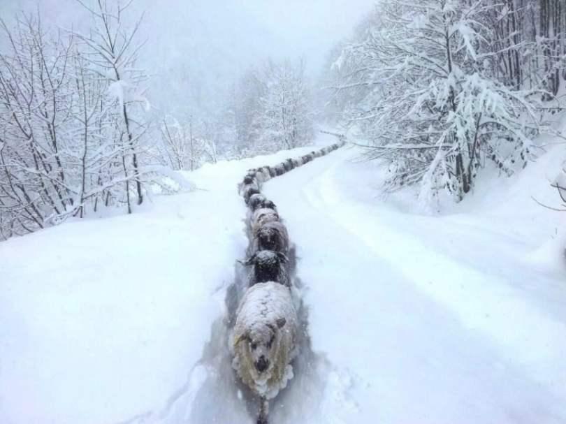 snow-express