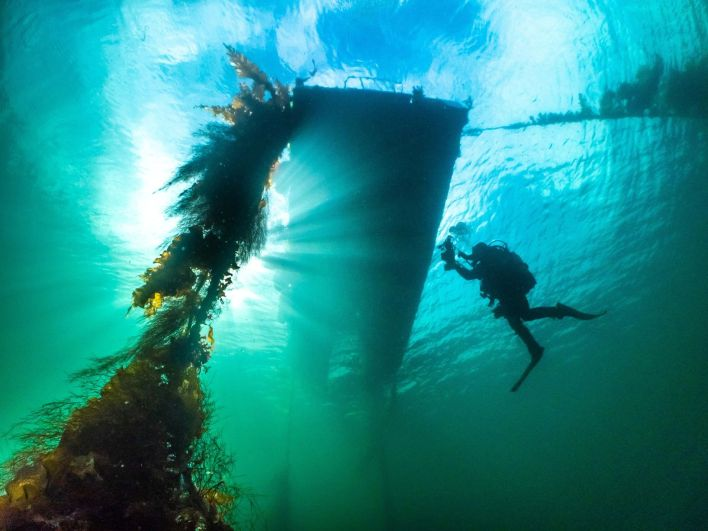 """10 неверојатни фотографии од океанскиот живот што учествуваа на натпреварот за """"Најдобар подводен фотограф на годината"""""""