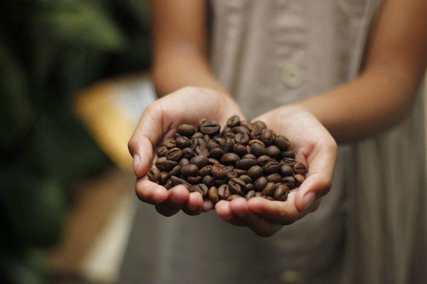 bourbon typica kaffeebohnen