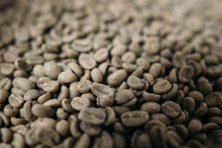 grüner kaffee test