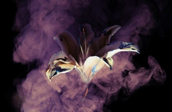 "Photo: Henry Hargreaves Photography. ""Smoke and Lily"" Source: Trendland.com http://trendland.com/henry-hargreavess-smoke-and-lily-photography/"