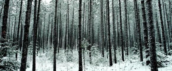 Pine Forest by Brandt Wemmer. Source: Fine Art America. (Direct website link embedded within.)
