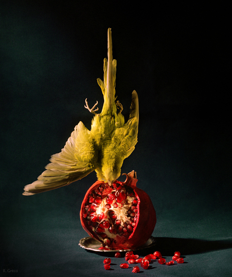 """Budgie and Pomegranate."""