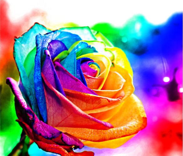 """""""Rainbow Rose"""" by D3ADJFR33MAN on Deviant Art. (Direct website link embedded within.)"""