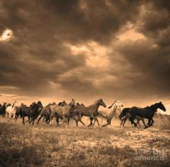"""Stampede"" by Blackwater Studio via Fine Art America. Original seems to be by photographer Adam Jahiel, ""The Last Cowboy Series."" (Jahiel website link embedded within.)"
