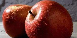 Le pommier est un arbre aux multiples variétés. Ici, des pommes Fuji, juteuses et sucrées. © Scott Bauer, USDA ARS, Wikimedia Commons, DP