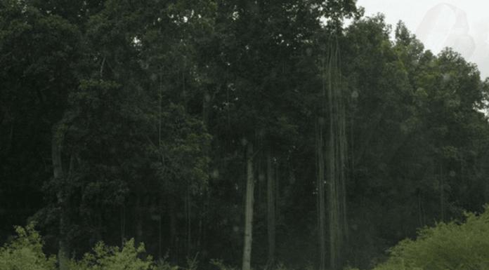 Forêt dense du nord de l'Angola