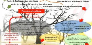 Stratégie et programme d'action nationaux pour la biodiversité