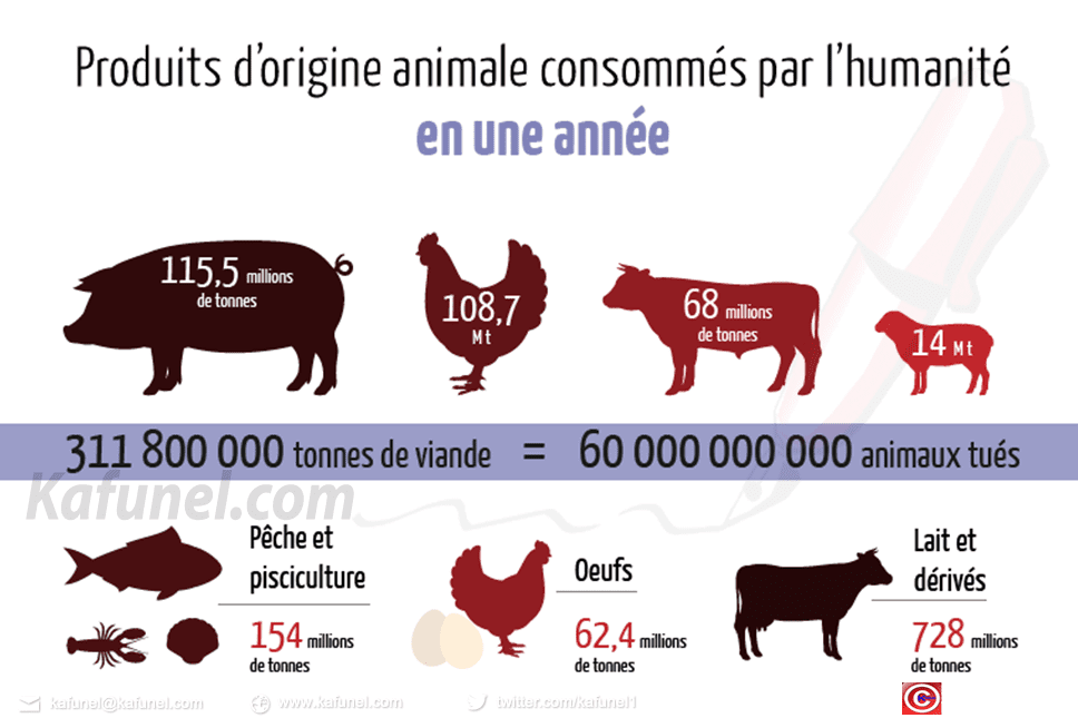 consommation-mondiale-viande