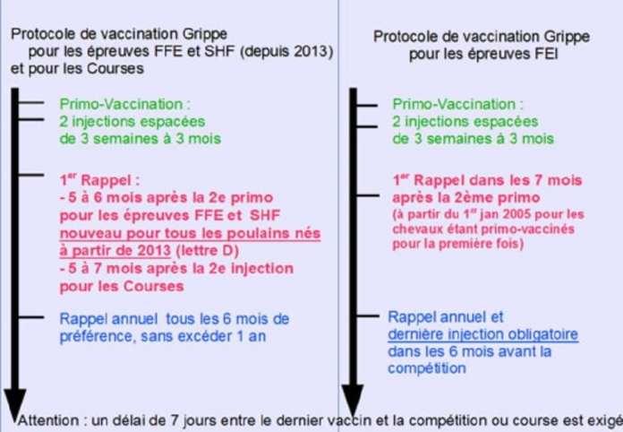 Plus de 300 animaux tués par la grippe équine au Sénégal