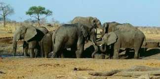 Zimbabwe : Le gouvernement vend plus de 90 éléphants à la Chine et à Dubaï