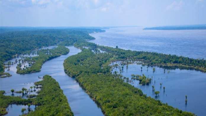Un bon géant : l'Amazone © MMPOP