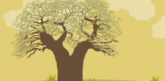 Bienfaits-du-baobab-sante