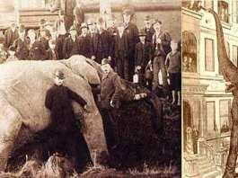 15 septembre 1885. Le jour où l'éléphant Jumbo est tué par un train