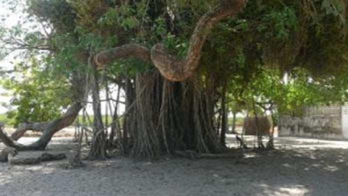 Randonnée de 8 jours à travers la haute Casamance.1