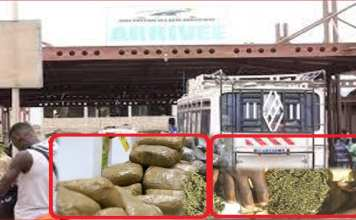 saisie de 300kg de chanvre indien à la gare routière de pikine (police)-Capture