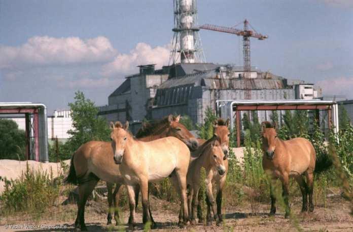 Nucléaire : 15 faits marquants sur la catastrophe de Tchernobyl Sûreté : le nucléaire sûr n'existe pas 5