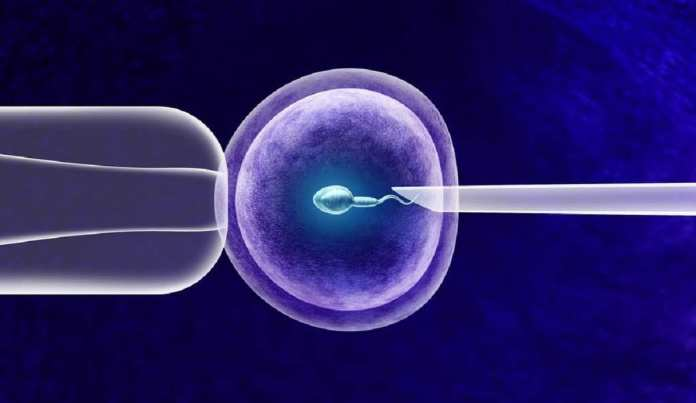 spermatozoides / Faut-il sélectionner les spermatozoïdes les plus vieux pour les FIV ?
