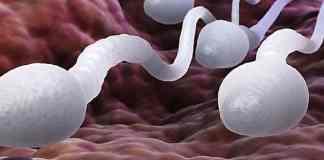 spermatozoïdes plus agés pourraient engendrer...