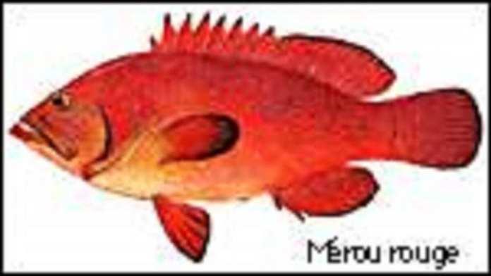 ph_merou