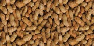 kaolack-la-coopedesi-veut-1000-tonnes-de-graines-d-arachide-selon-sa-presidente