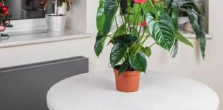5 plantes exotiques pour mon intérieur