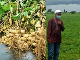 kolda-le-maer-table-sur-4-millions-de-tonnes-de-cereales-l-annee-pour-la-securite-alimentaire-du-pays