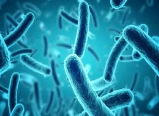 Comment les salmonelles peuvent contaminer la nourriture (et pas seulement le lait infantile)