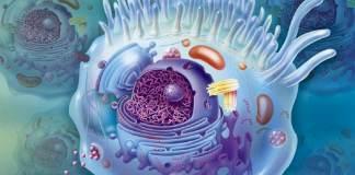 Comment fonctionne un vaccin à ARN 0