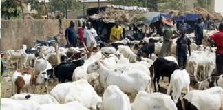 tabaski-2021-35-points-d-approvisionnements-en-moutons-officiellement-ouverts-a-dakar